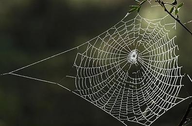 Unraveling the spider's web