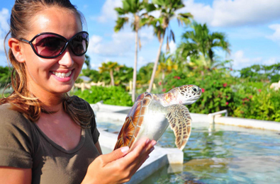 Stop by the Cayman Turtle Farm
