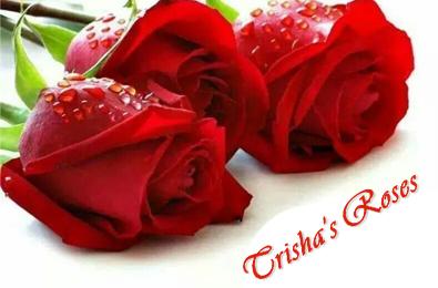Trisha's Roses